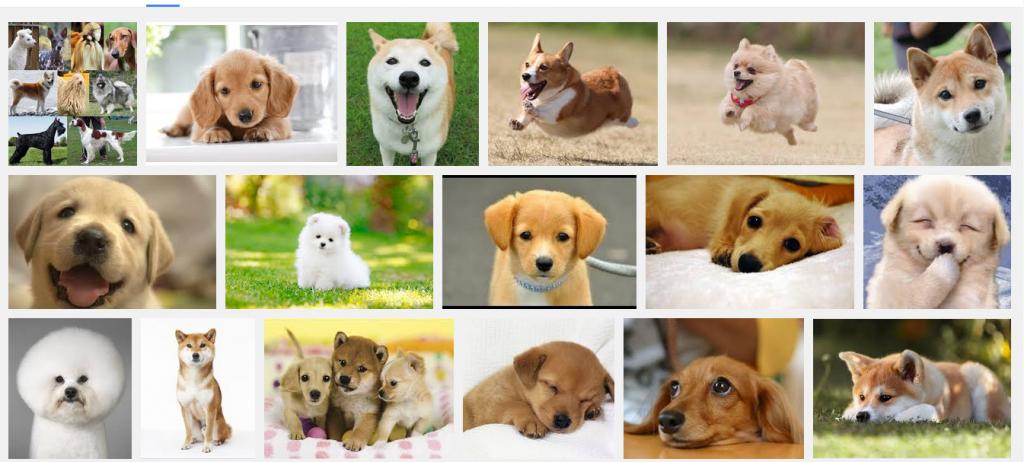 画像検索犬