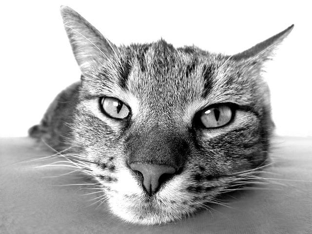 Katzenspielzeug / Pixabay